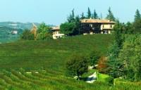 Saiagricola - San Marzano Olivetto