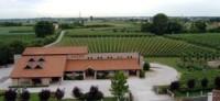 Azienda Agricola Giorgio Cecchetto - Terre di Piave